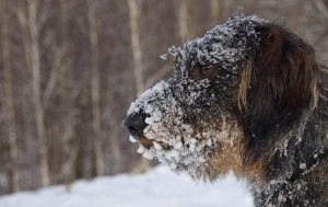outdoor animals - cold weather