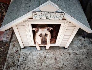 outdoor animals - shelter